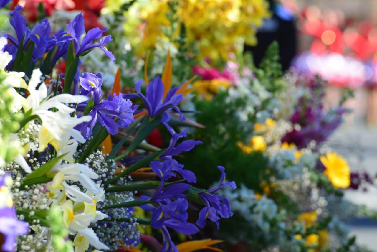 Cinquantamila fiori di Sanremo per decorare la cerimonia di consegna dei Premi Nobel il 10 dicembre a Stoccolma