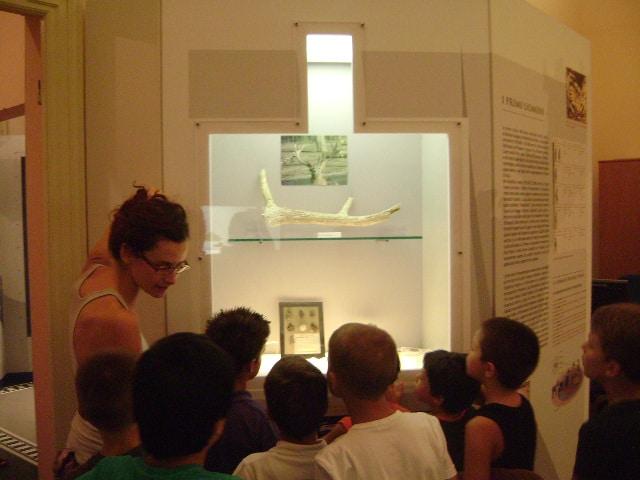 Un grande successo hanno riscosso le iniziative organizzate dal MARM-Museo Civico di Diano Marina per i più piccoli.