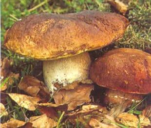 Andare per funghi con l'aiuto dell'Hi – tech