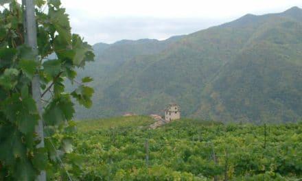 L'appeal della vendemmia per riscoprire i borghi di Liguria