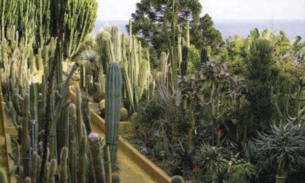 "Bordighera: Sabato 25 Agosto visita guidata ai ""Giardini Pallanca"""