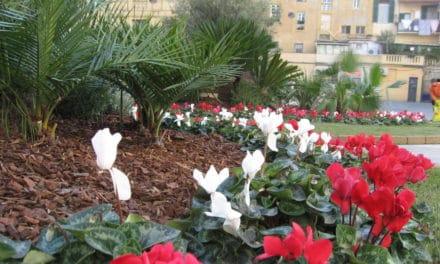 Sanremo: P.zza Borea d'Olmo ritorna ad essere un giardino