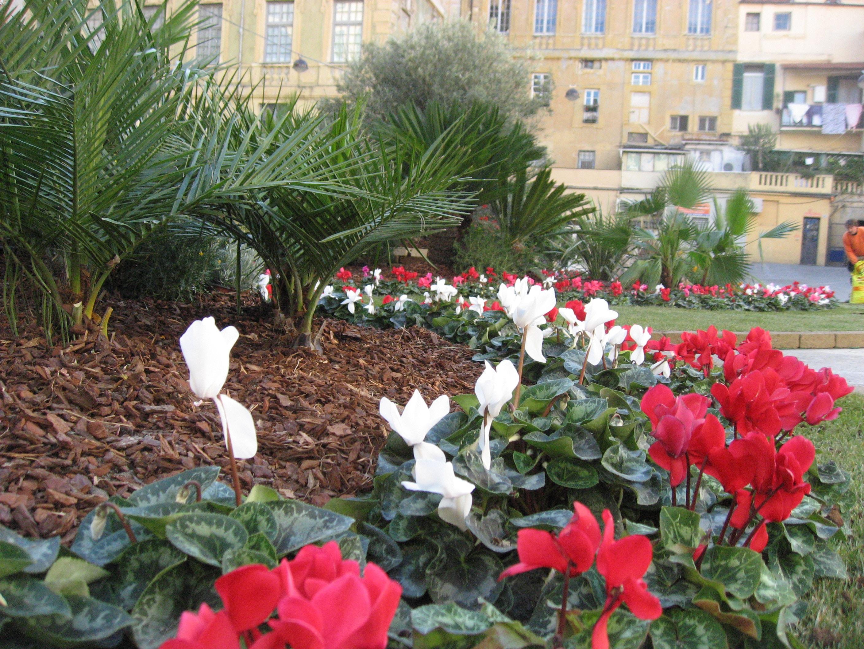 """Un piccolo """"polmone verde"""" nel cuore della città matuziana, questo il senso del lavoro portato a termine pochi giorni fa dall'Ufficio Beni Ambientali del Comune di Sanremo."""