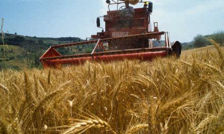 ANGA: un programma per rilanciare competività e innovazione nel mondo dei giovani agricoltori