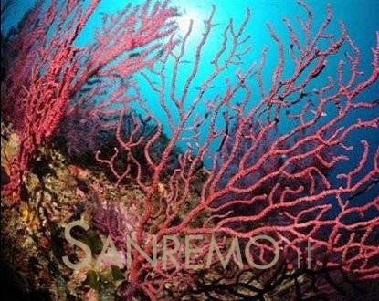 L'exceptionnelle faune sous-marine de la Baie des Anges
