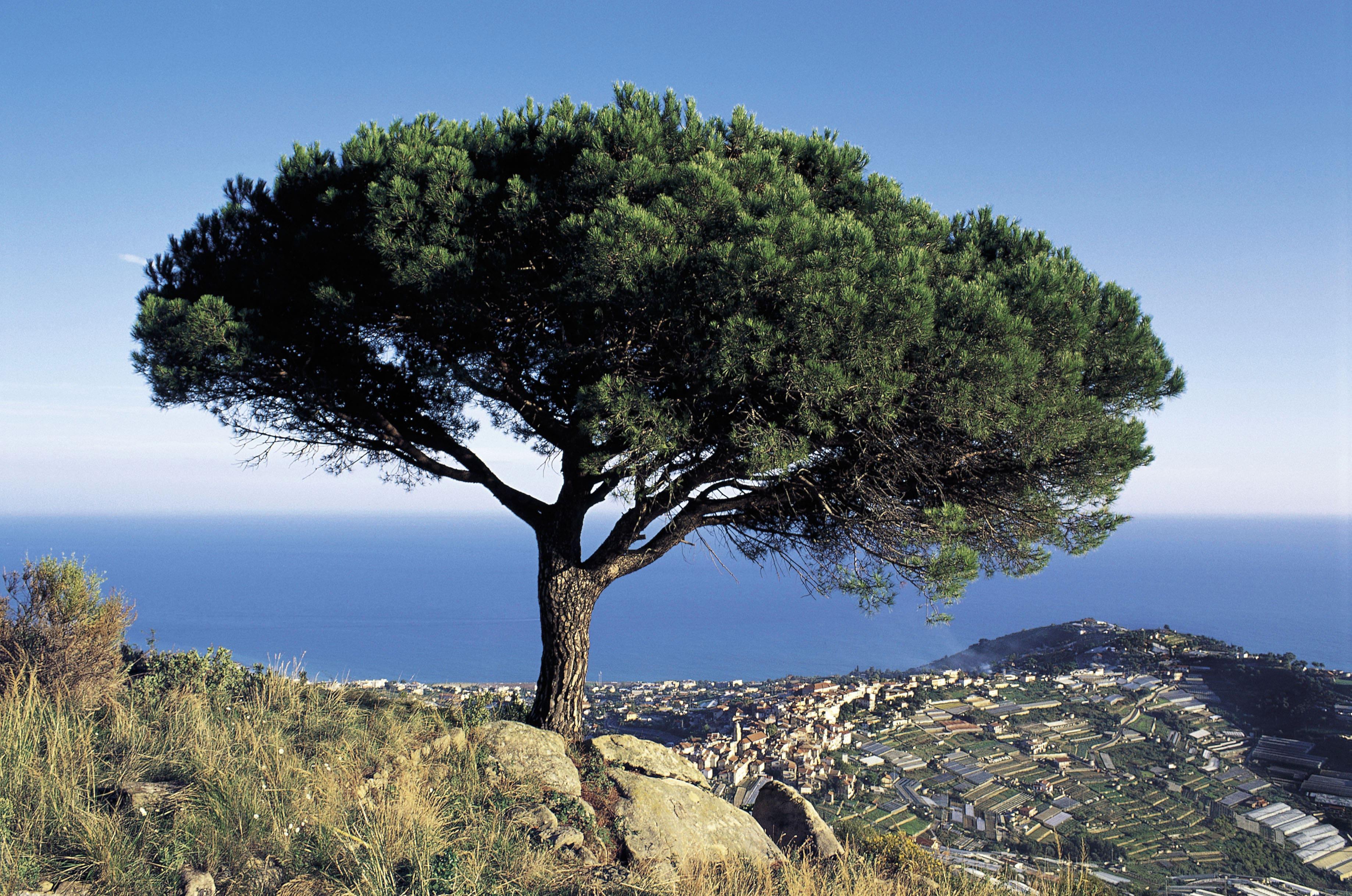 """""""Liguria, l'immagine di te sempre nel cuore"""" cantava Sbarbaro, immerso nel paesaggio ligure come consolazione al male di vivere, lo stesso di quel Montale tra le cui parole emerge vivida…"""