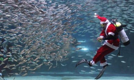 A Imperia Babbo Natale fa immersioni da sub