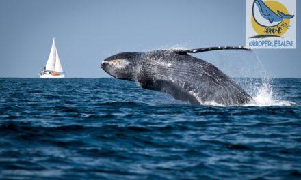 """Sanremo """"corre per le balene"""" del Santuario Pelagos"""