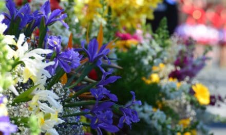 Nobel e Sanremo: la premiazione a Stoccolma con i fiori liguri