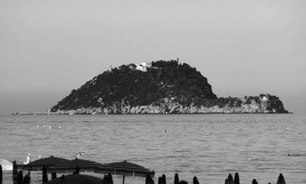 Isola Gallinara, una testuggine sorta dal mare.