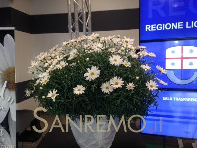 Itala: la nuova margherita ligure che omaggia Calvino