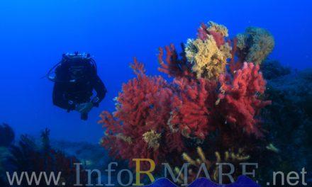 Un'immersione nel blu con InforMare al Museo Navale di Imperia