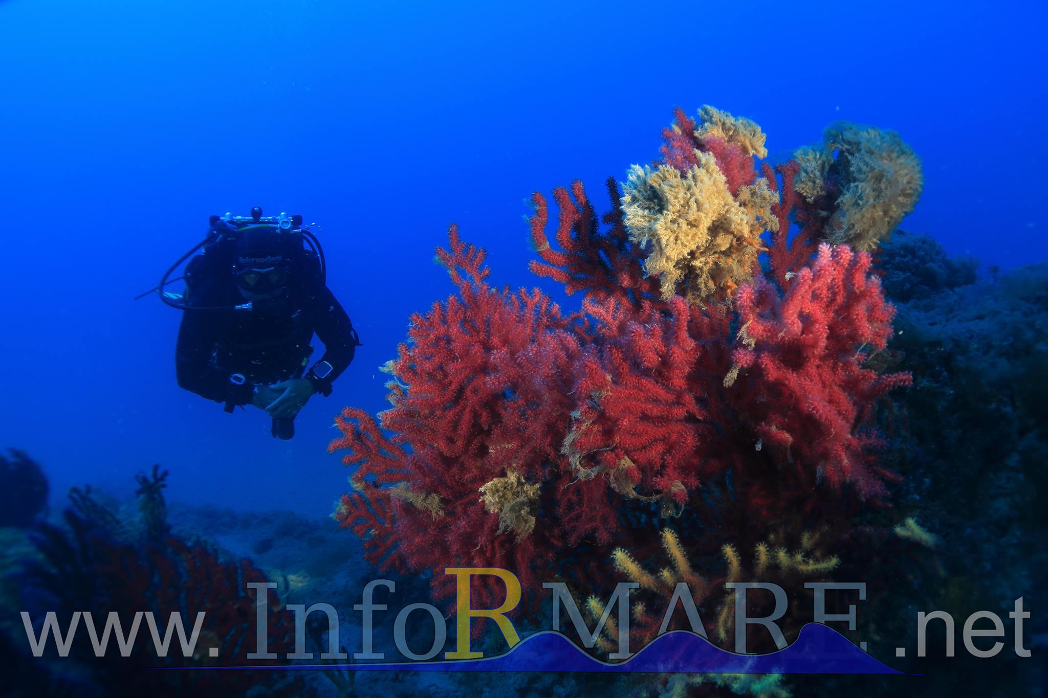 Giovedì 24 agosto una serata speciale con video e foto delle meraviglie sommerse del Ponente ligure