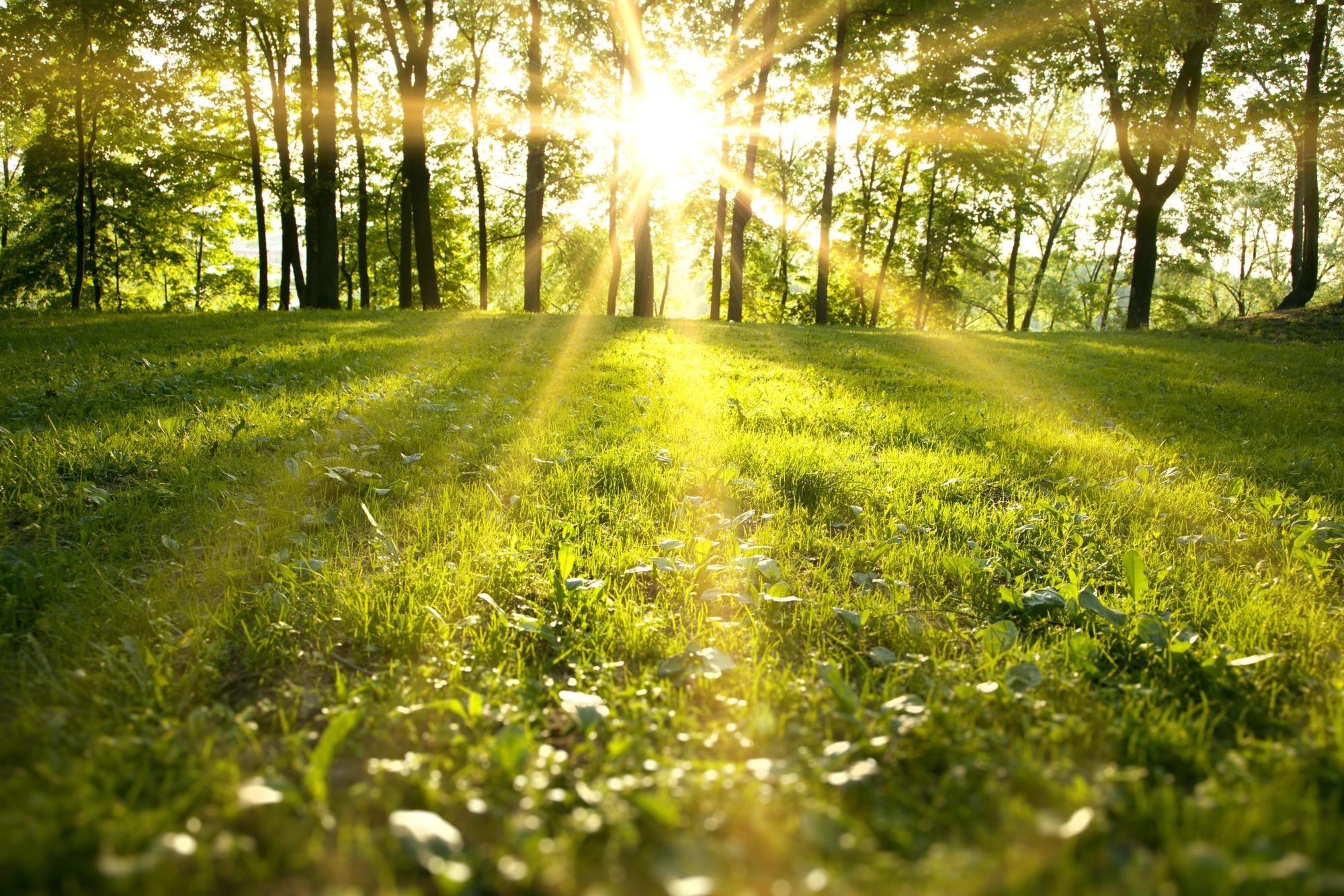 Il Parco Novaro di Costarainera e il suo restyling come area verde dedicata al benessere