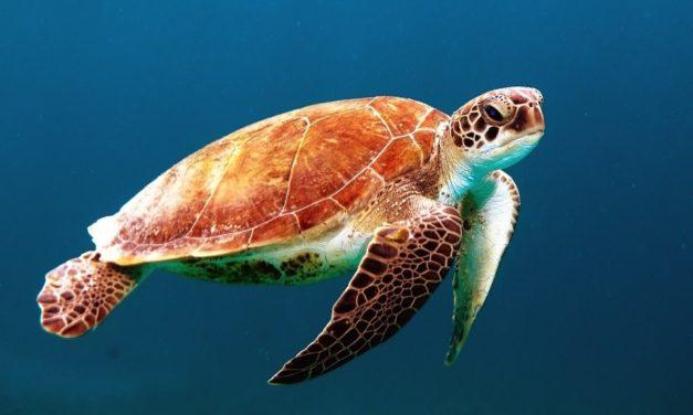 Il gala di Montecarlo per l'oceano