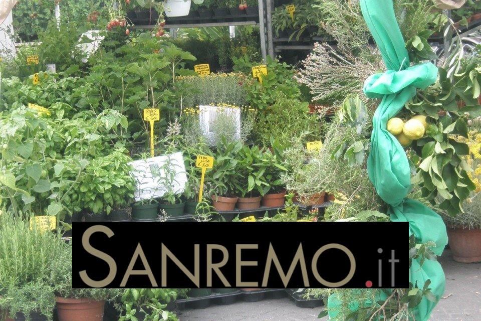 """""""Aromatica"""": la quinta edizione ad aprile, tra basilico, erbe e profumi del Golfo Dianese"""