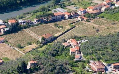 Il Pigato: un vitigno varietale che vuol dire Liguria occidentale