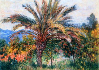 Palmier à Bordighera - Collezione privata, USA @WikiArt